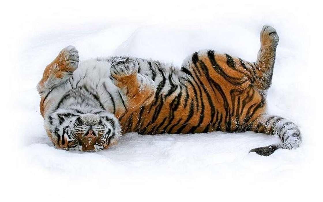 Доброе утро забавные картинки с тигрятами