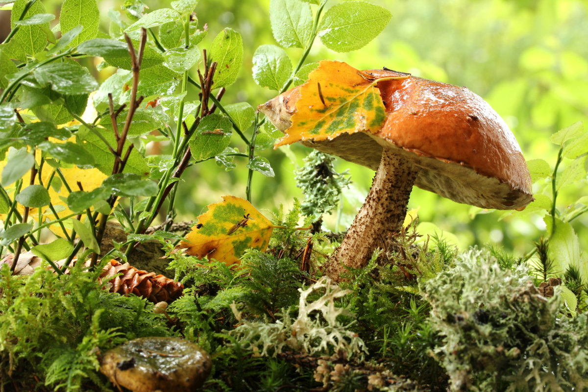 картинка осеннего леса с грибами и ягодами этого