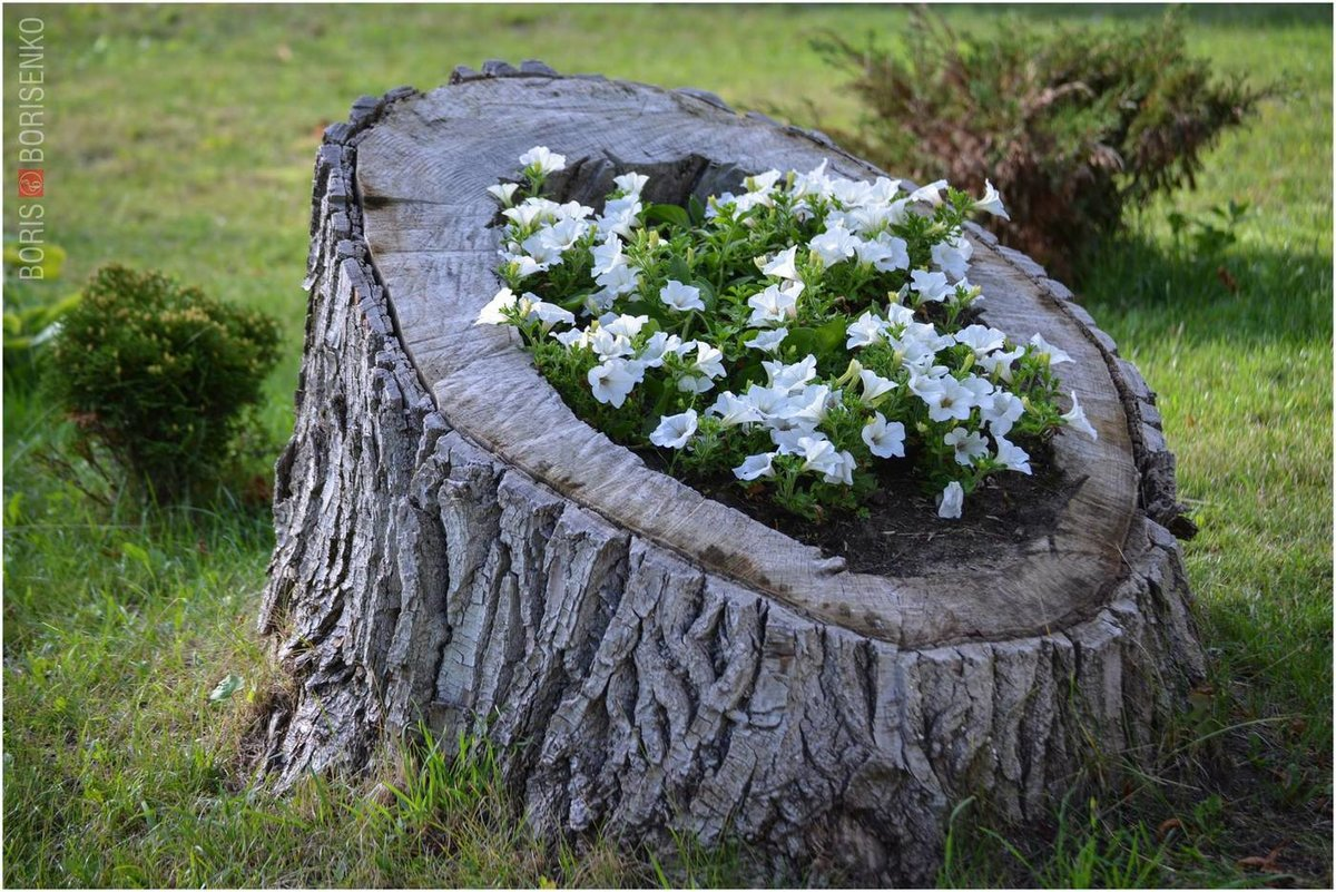 работа как украсить пеньки в саду фото самая популярная