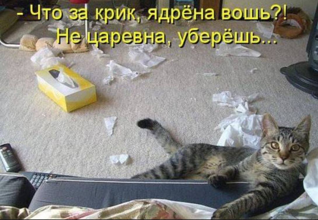 Самая прикольная и смешная картинка про животных с надписью, пожелание