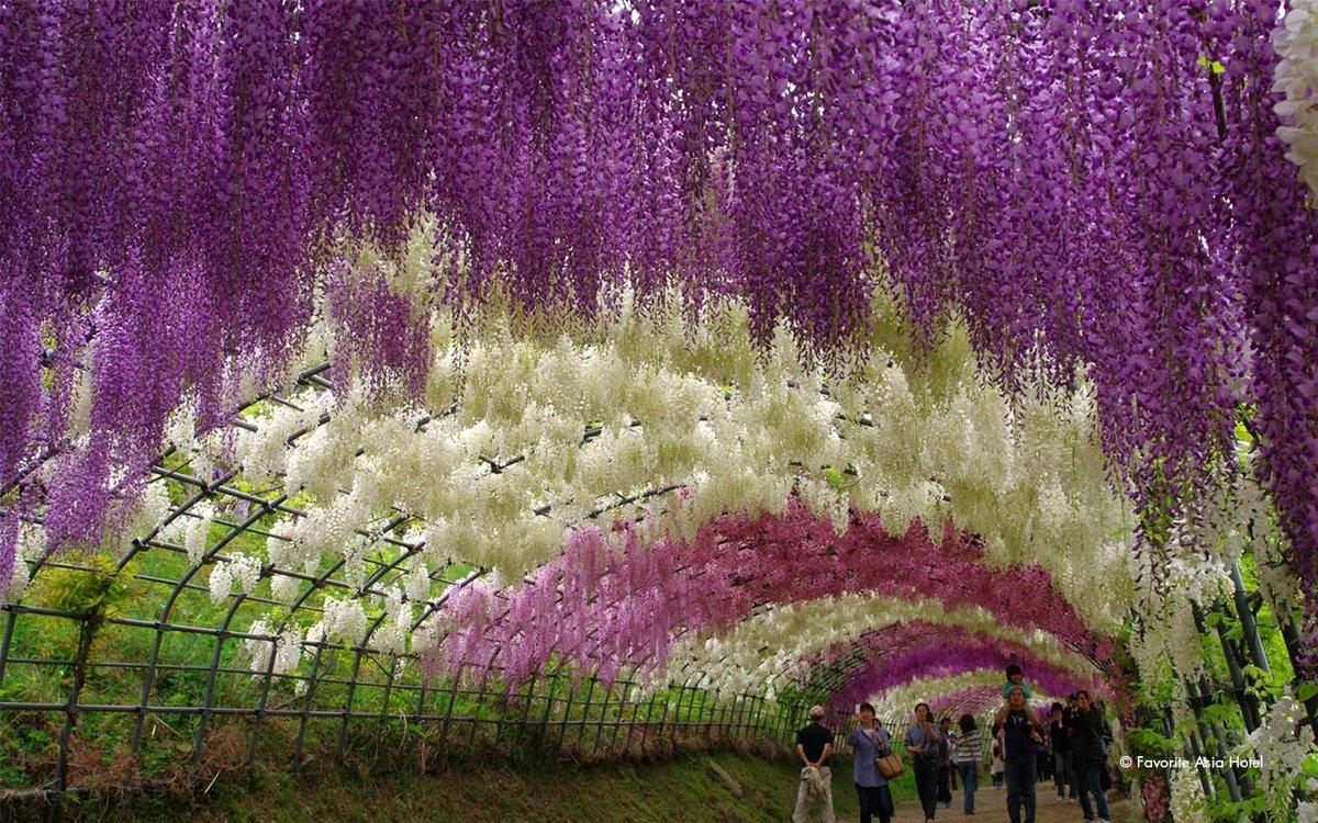 маску плотной смотрите картинки по запросу цветы мира фотографии красивую