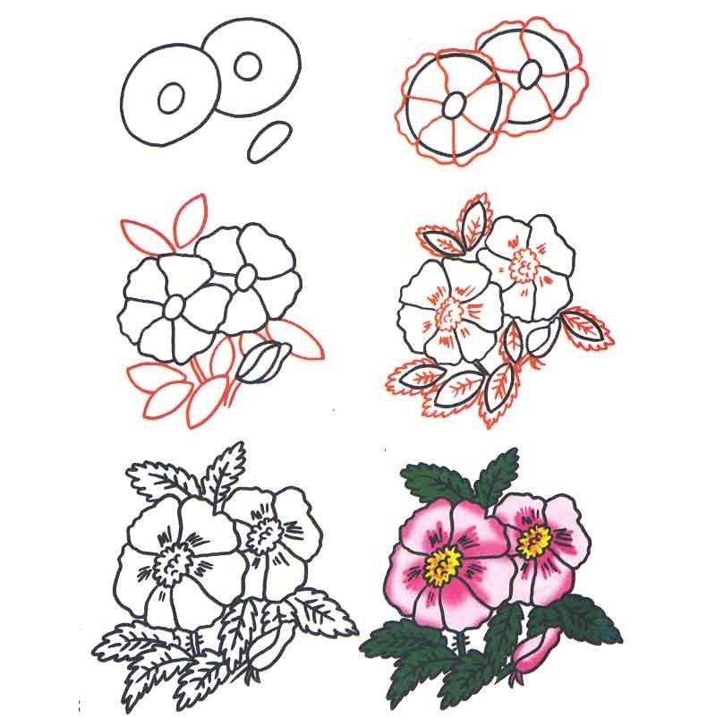 научиться рисовать картинку с цветами сразу