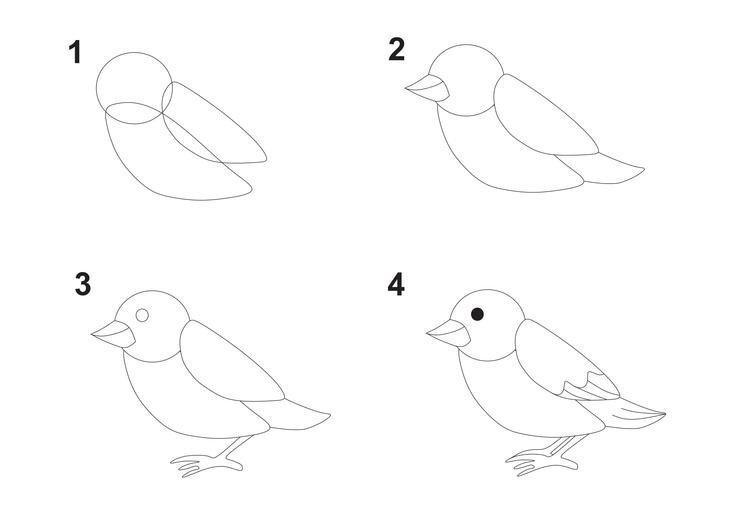 картинки птиц как их нарисовать
