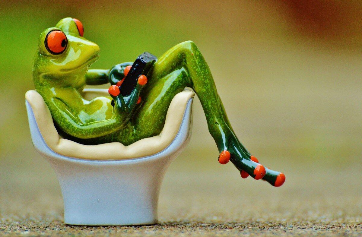 Картинки смешные с лягушками, открытки удачи