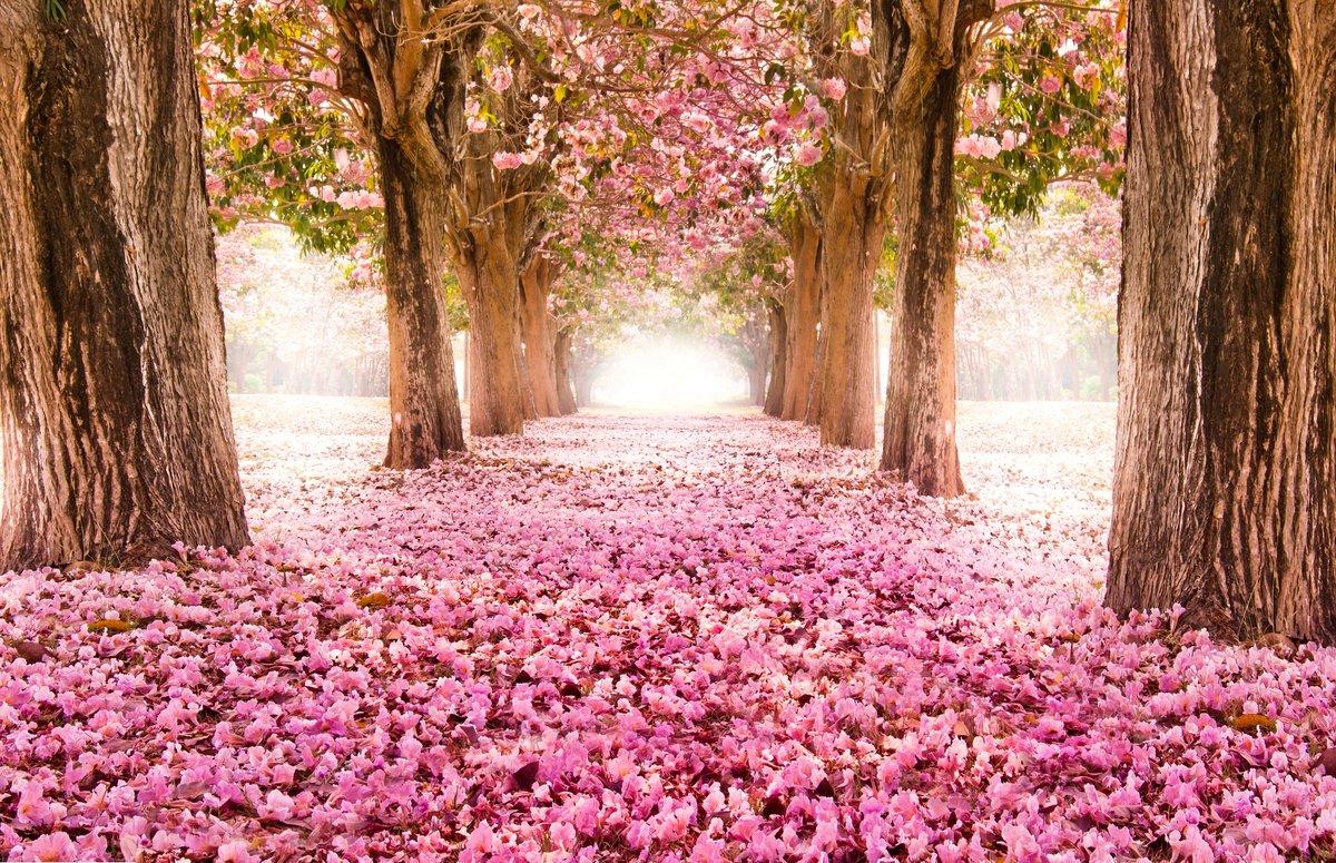 Фоны для фотошопа красивые места