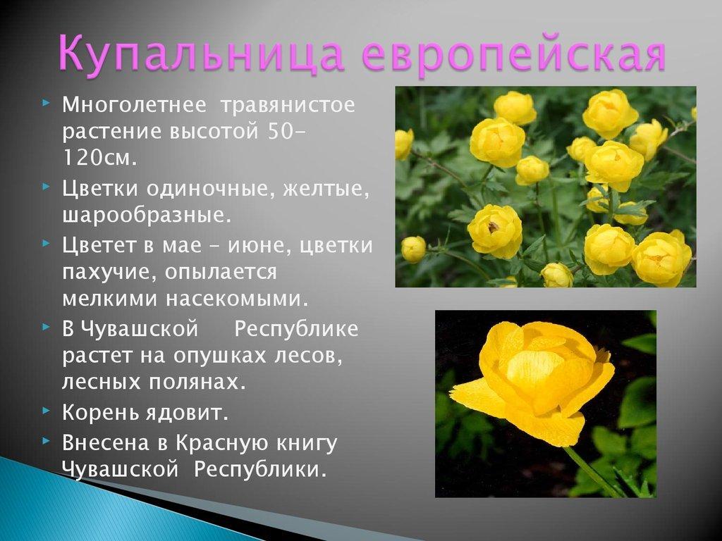 кто-то хочет растения красной книги с картинками и названиями маникюр золотом