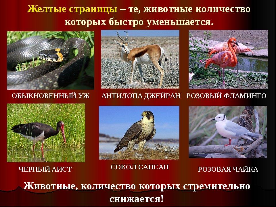 Смотреть животных из красной книги с картинками