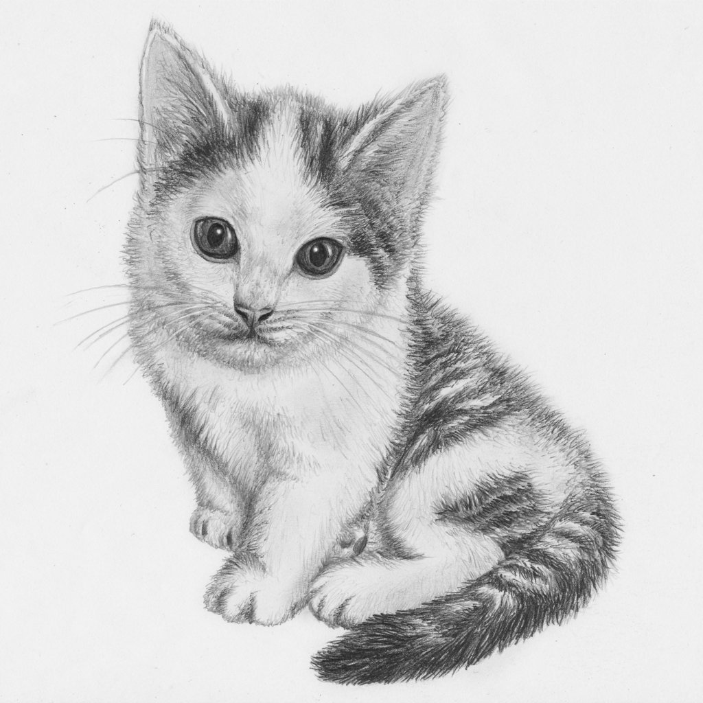 Cat drawing pencil realistic cat pencil sketch drawn kitten pencil drawing pencil drawing artsy