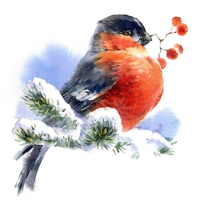 Смешные папа, снегири зимой открытка