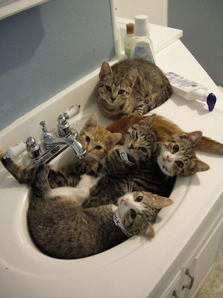 Приколы про коте в картинках