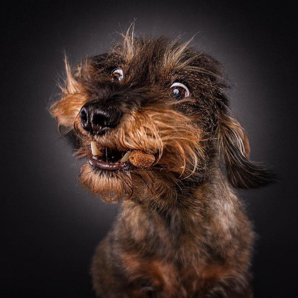 Прикольные фото собак, для