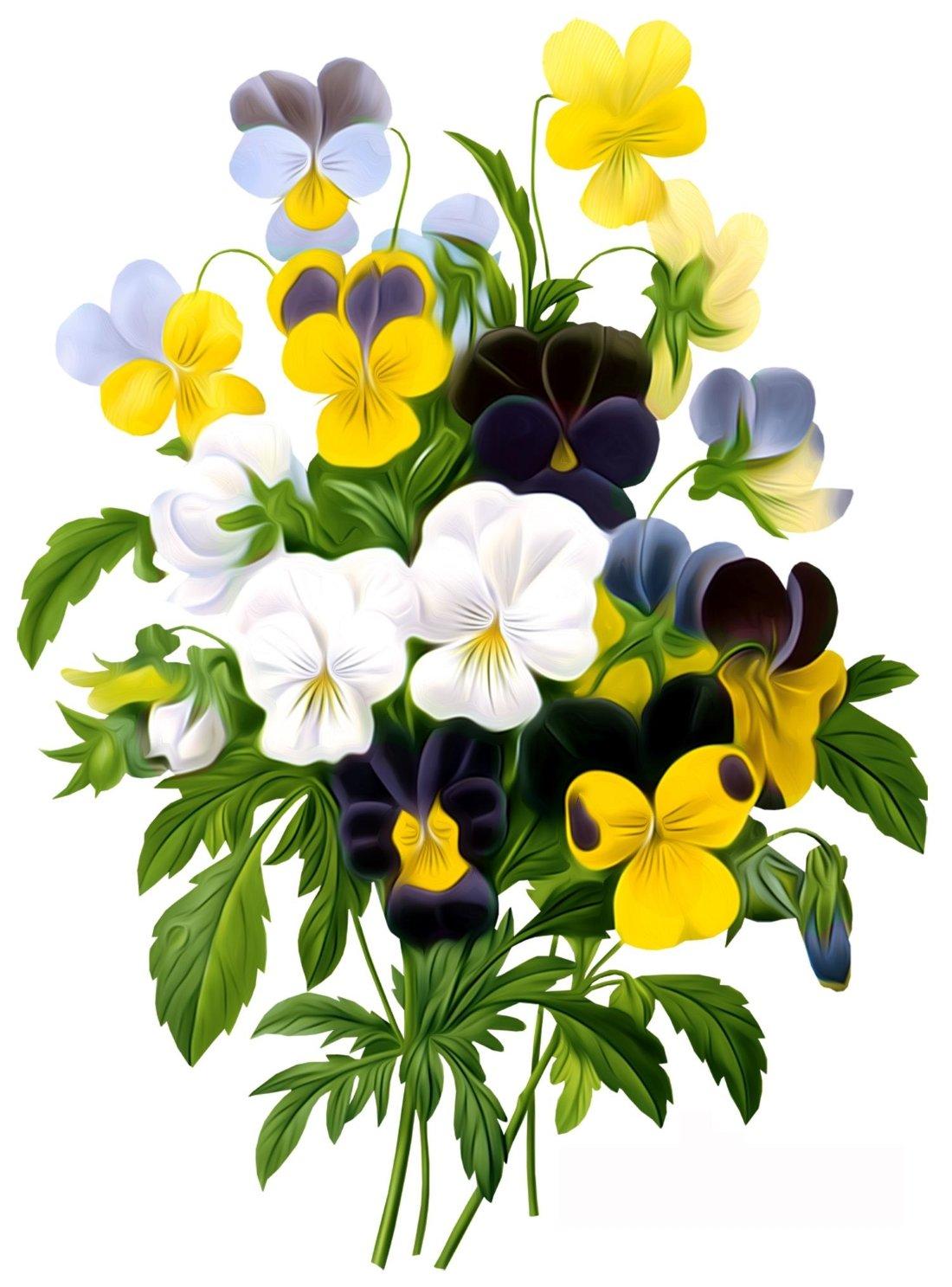 Открытки цветы анютина глазки, днем рождения