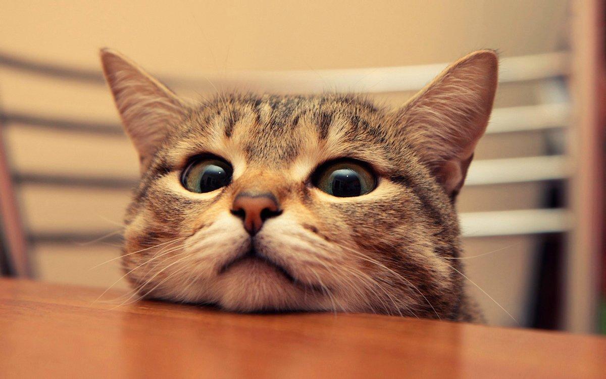 Прикольная картинка на кошку, днем