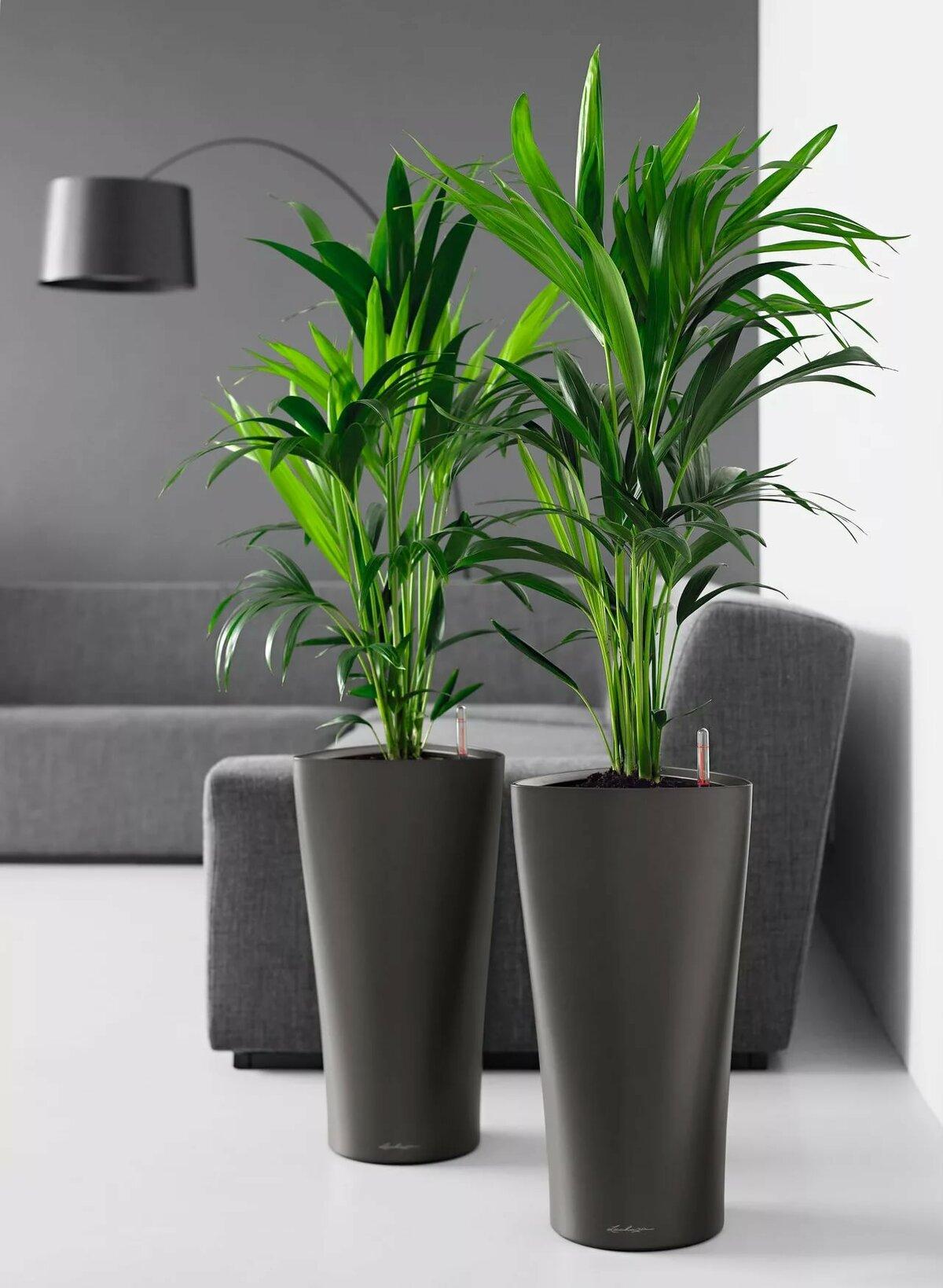 как дом растения комнатные картинки них