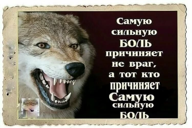букета волк картинка с цитатами все