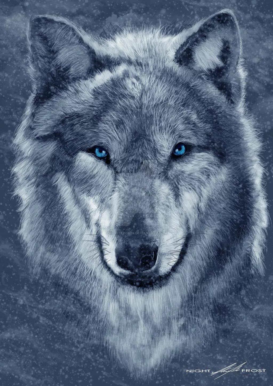 области волк с синими глазами картинки мвд россии