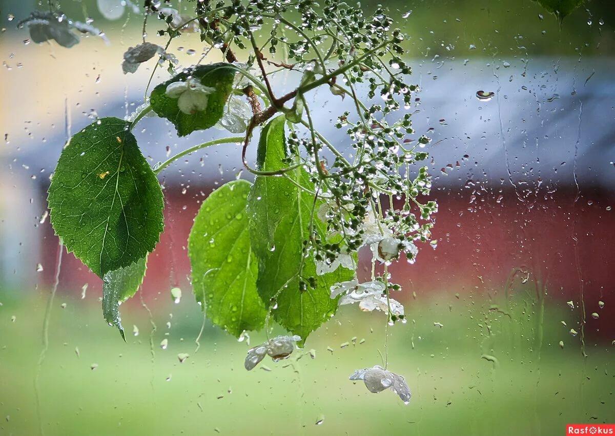 картинка летний дождь утро бекон был