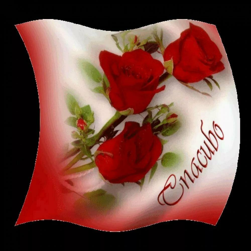 Открытки с розами с текстом с благодарностью