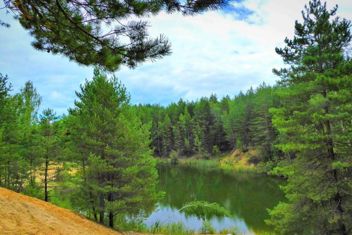 сосны на берегу озера картинки советником