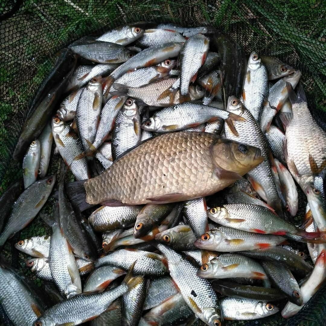 Fish XXL - активатор клева в Экибастузе