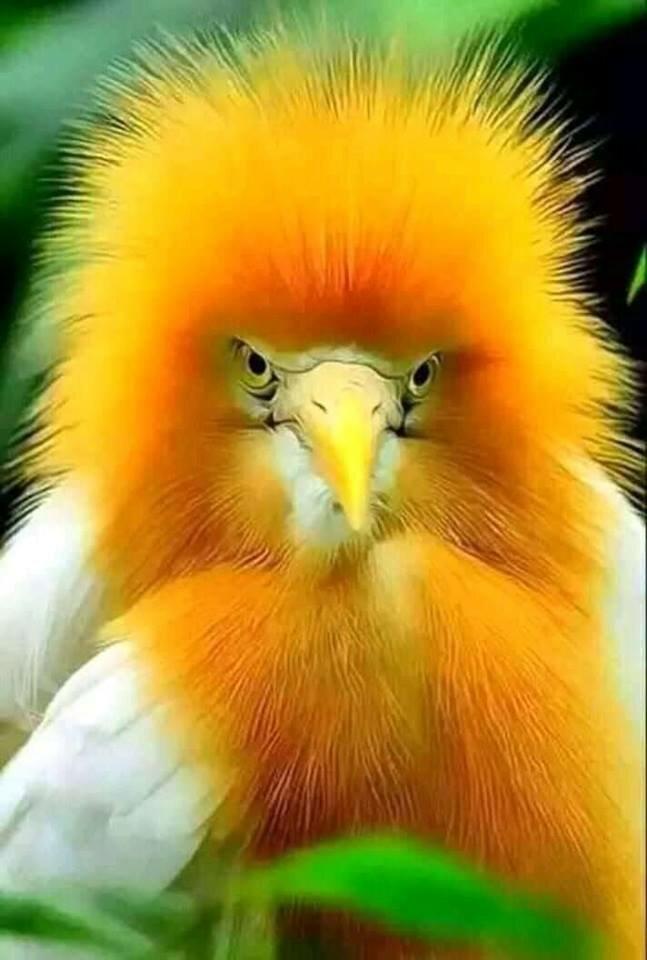 Картинки прикольные птички, про