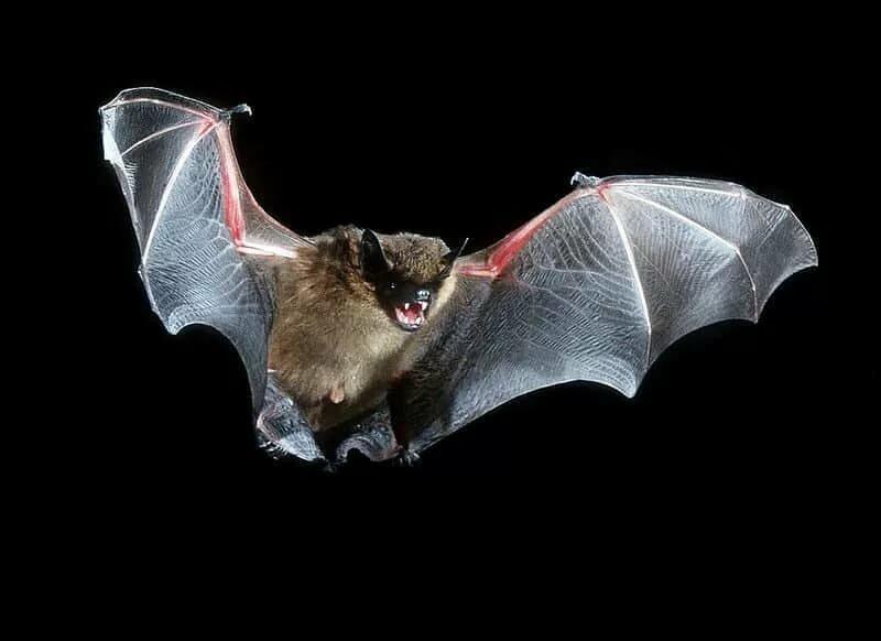заявил, что картинка летучий мышонок даже зная