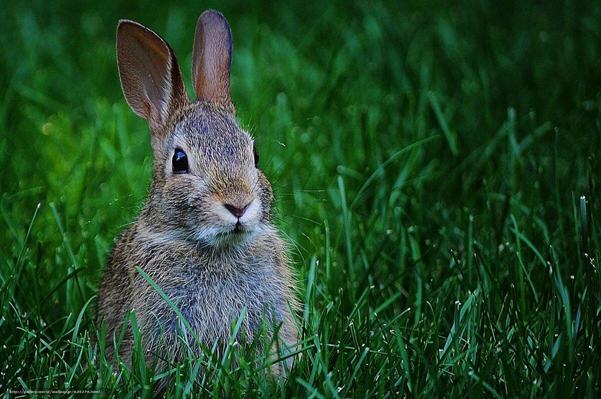 наших картинка зайца самая лучшая друзья