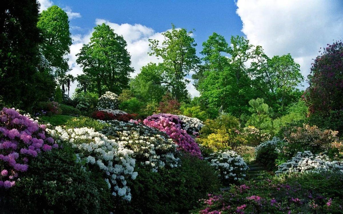 Картинка с красотой растений, фотки картинки шикарная