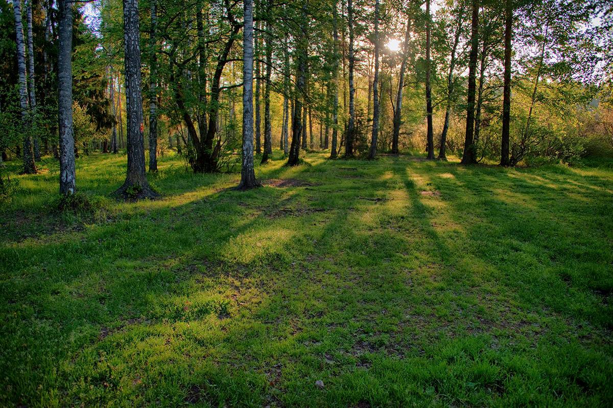 Картинки полянка лесные
