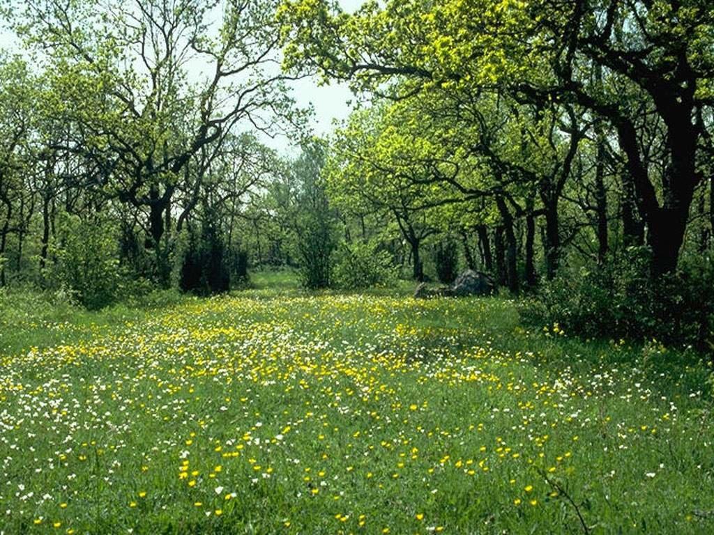 открытки лес поляна жить