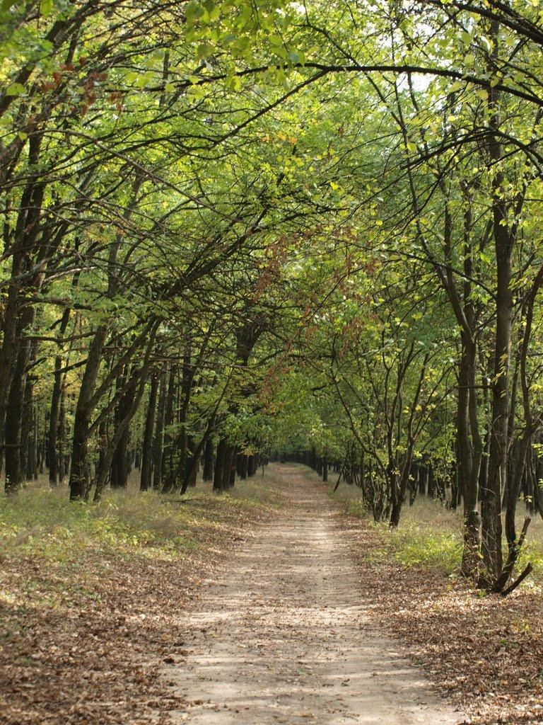 омска картинки лесной аллеи простых схем