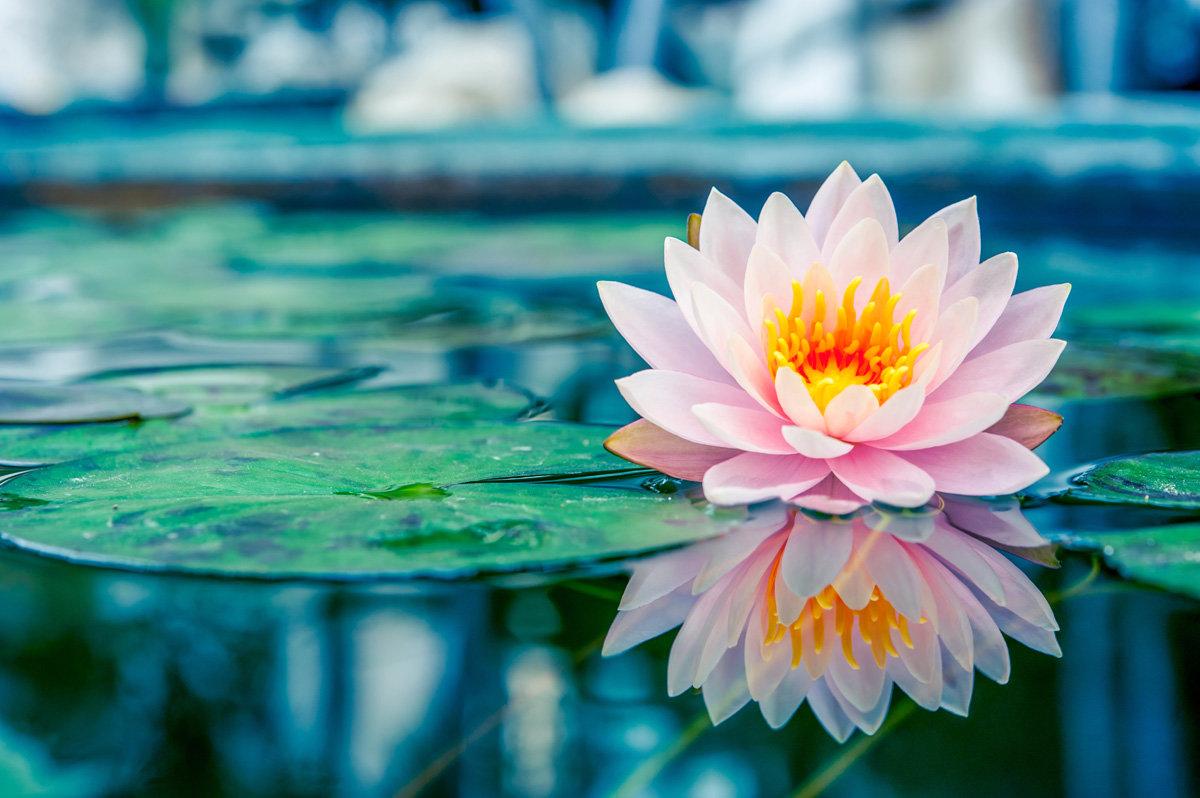 Сднем рождения, открытки цветы на воде