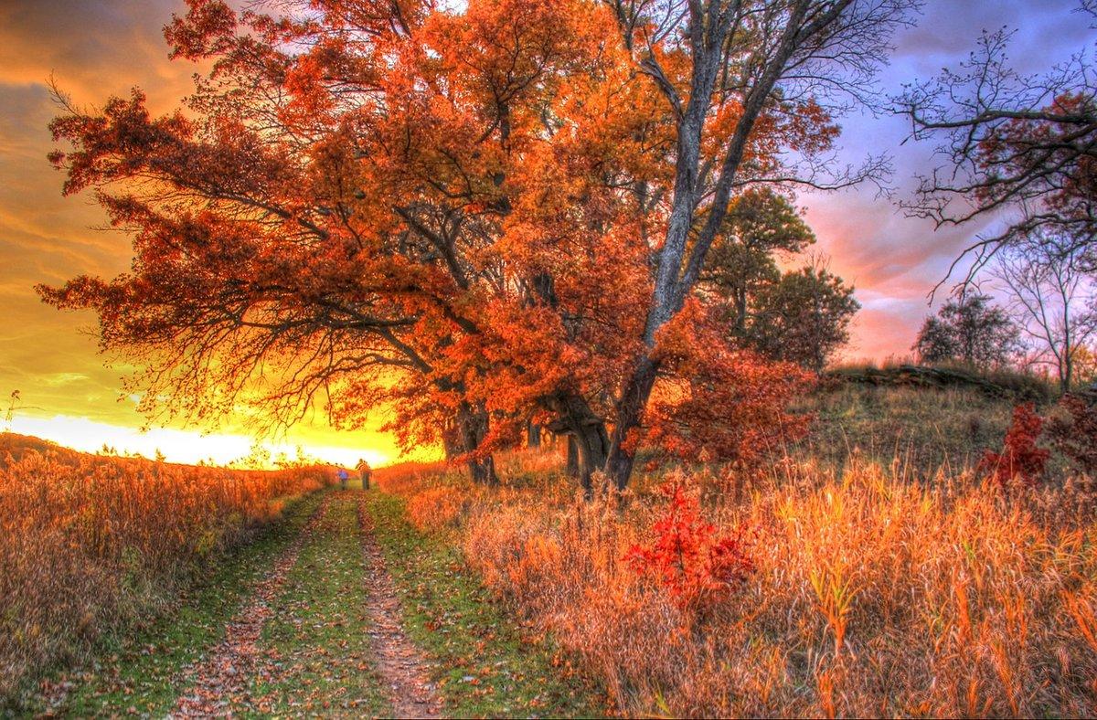 Осенью безумно красиво. Никакая другая пора не сможет посоревноваться с королевой рыжего цвета.