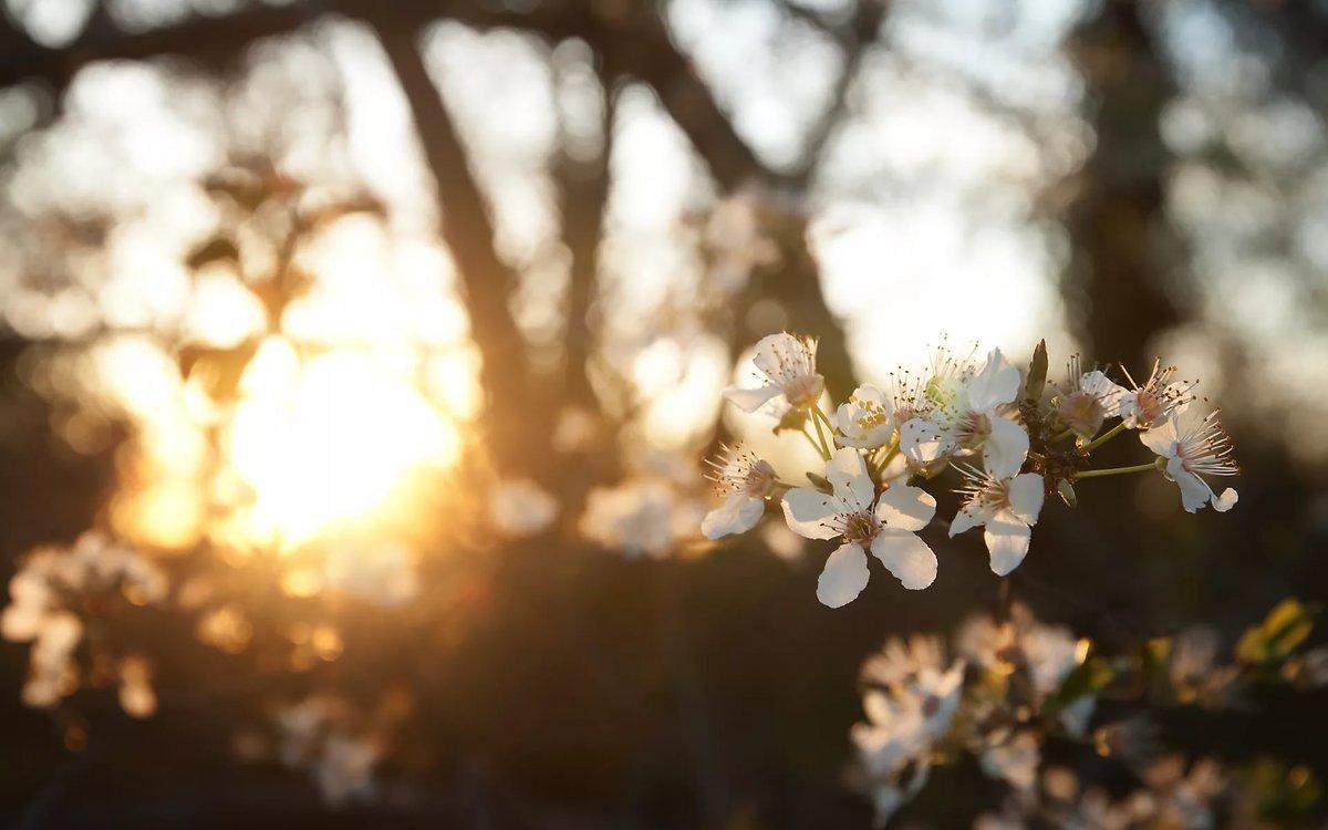 Днем рождения, красивая открытка природы солнце весна