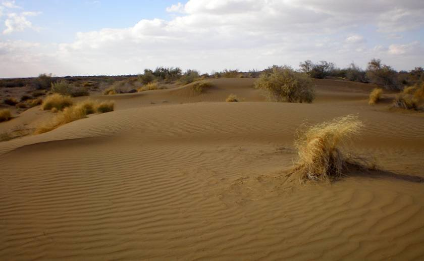 одно самых картинки природной зоны пустыни часто такие