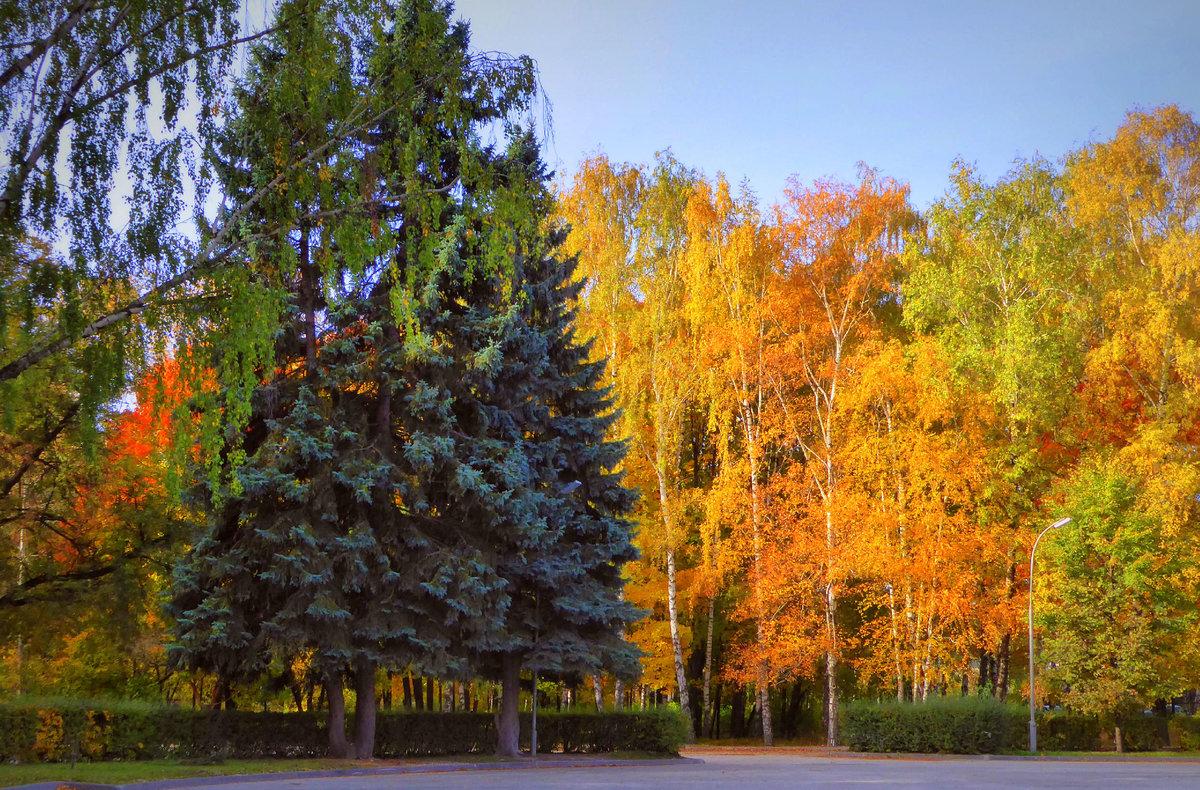 Елка осенью картинки