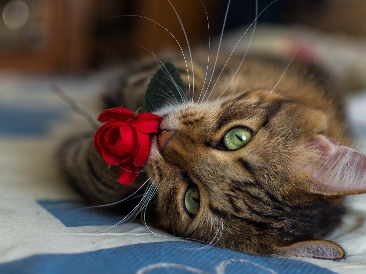 Открытки, картинки милые котики