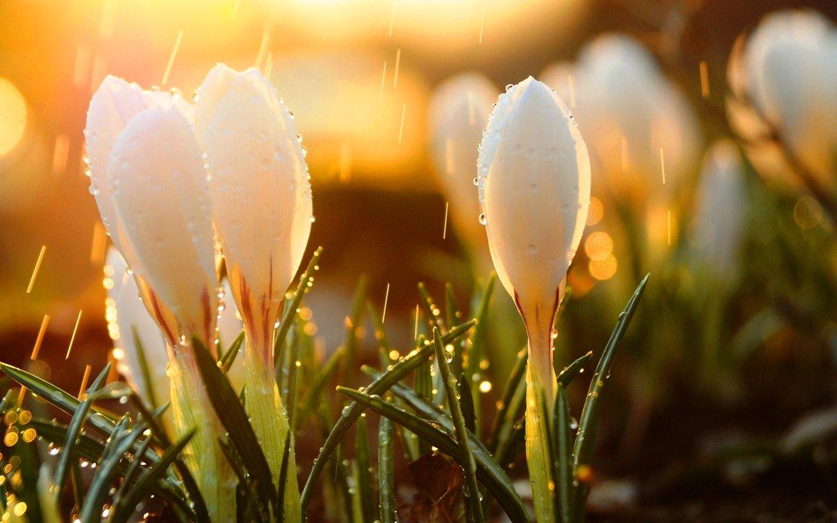 Картинки на каждый день весна, тебя хочу