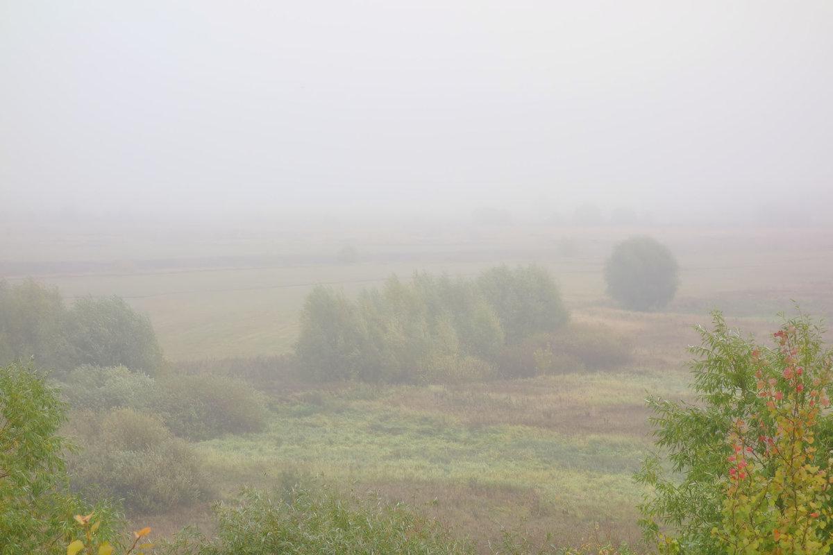 туман осенний...#lyudamihailova #утро #просторы #туман #осень #травы #деревья