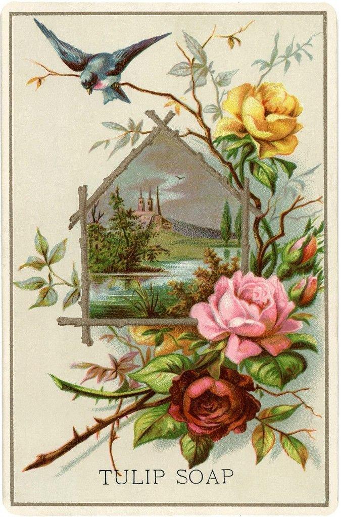 Днем, старинные открытки растения