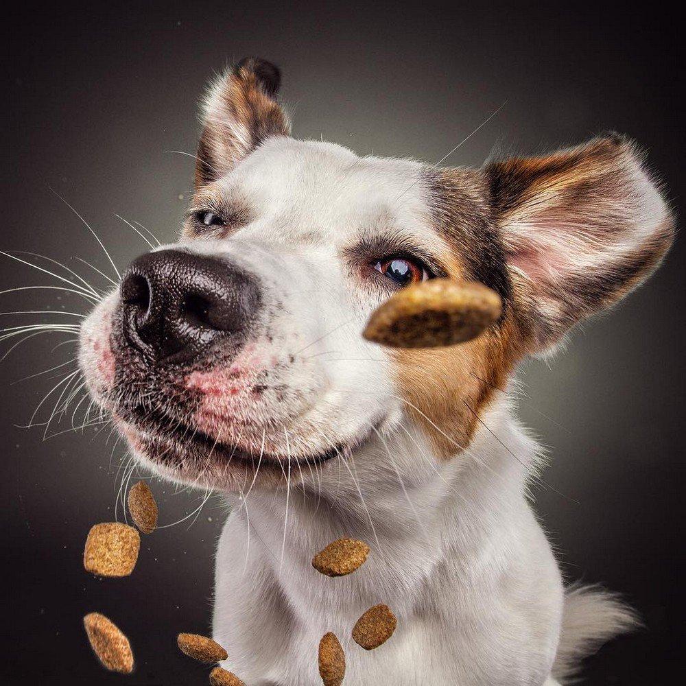 Прикольные картинки фото с собаками
