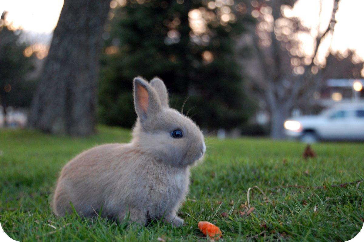 картинки разных зайцев