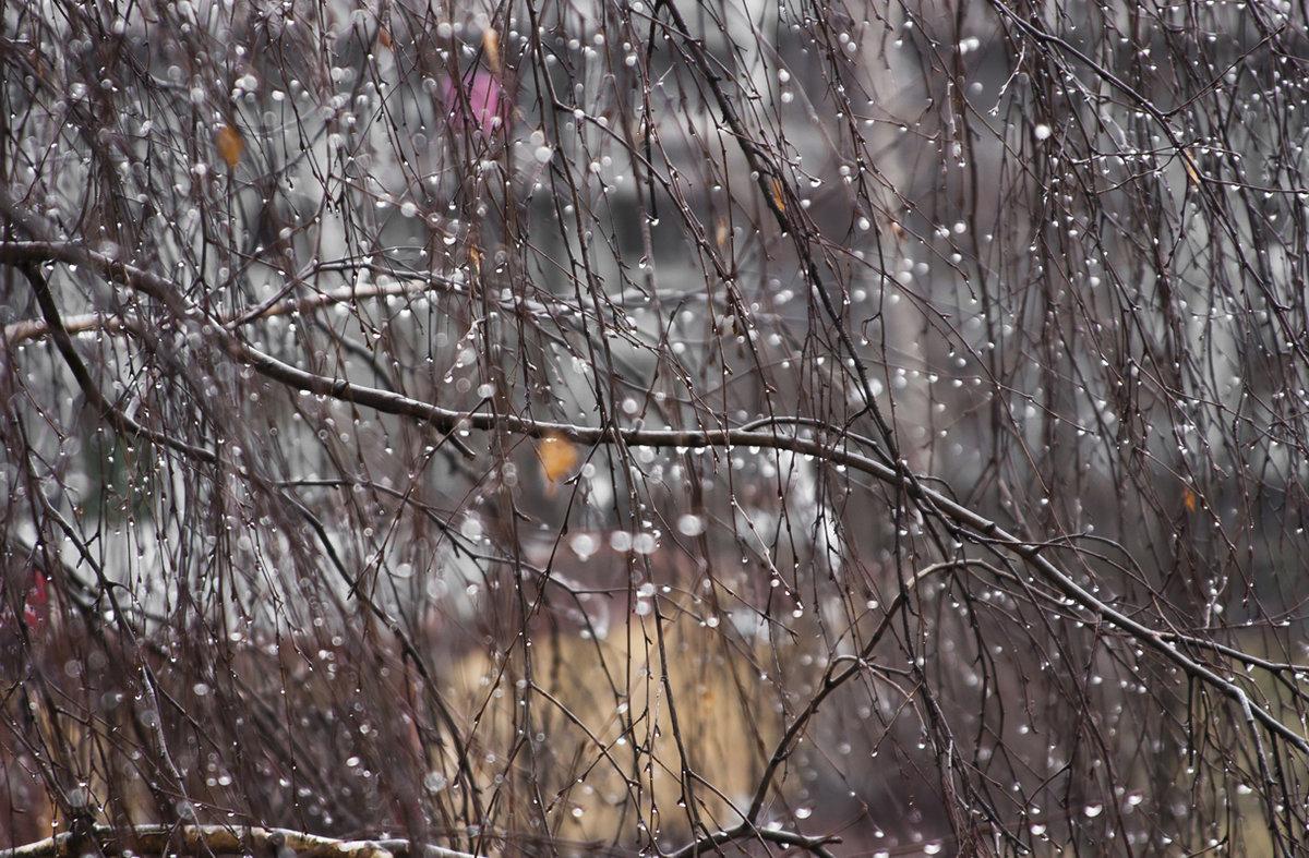 если картинки пасмурная погода дождь важен опыт частных