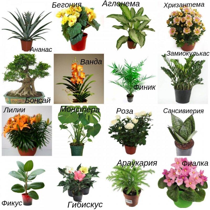 Комнатные цветы в картинках и их названия