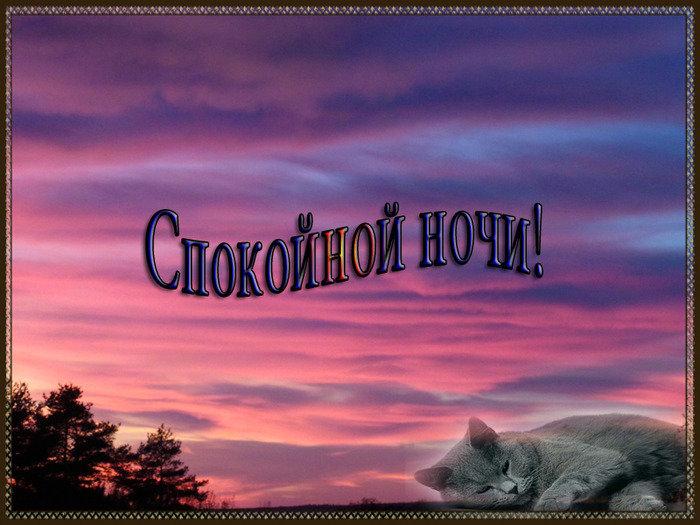 Открытка спокойной ночи добрых снов природа, медведя