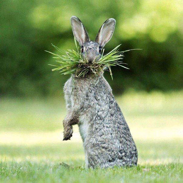 Картинка кролик прикол, поздравления картинки открытки