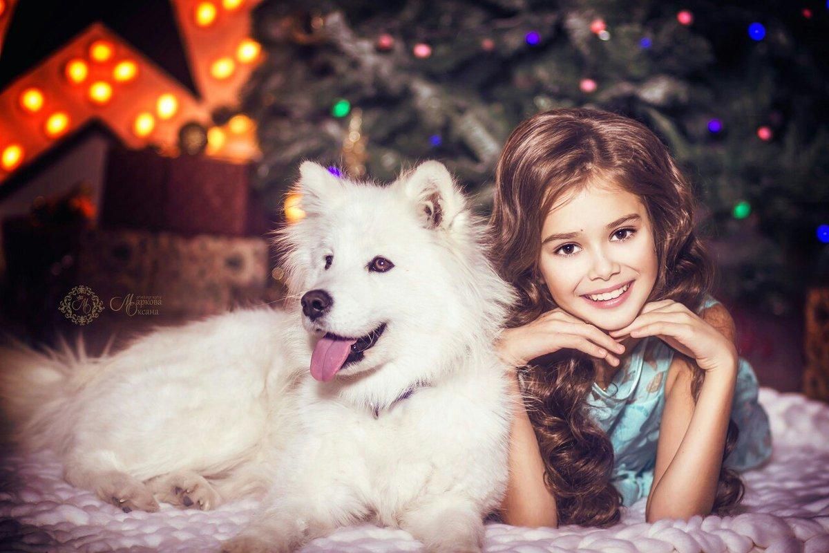 Новогодние картинки с собаками самоедами