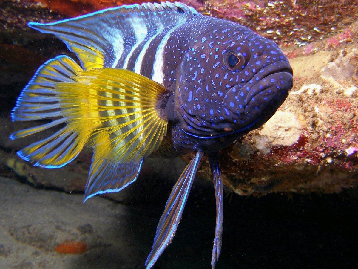 Вас понял, рыбы картинки красивые