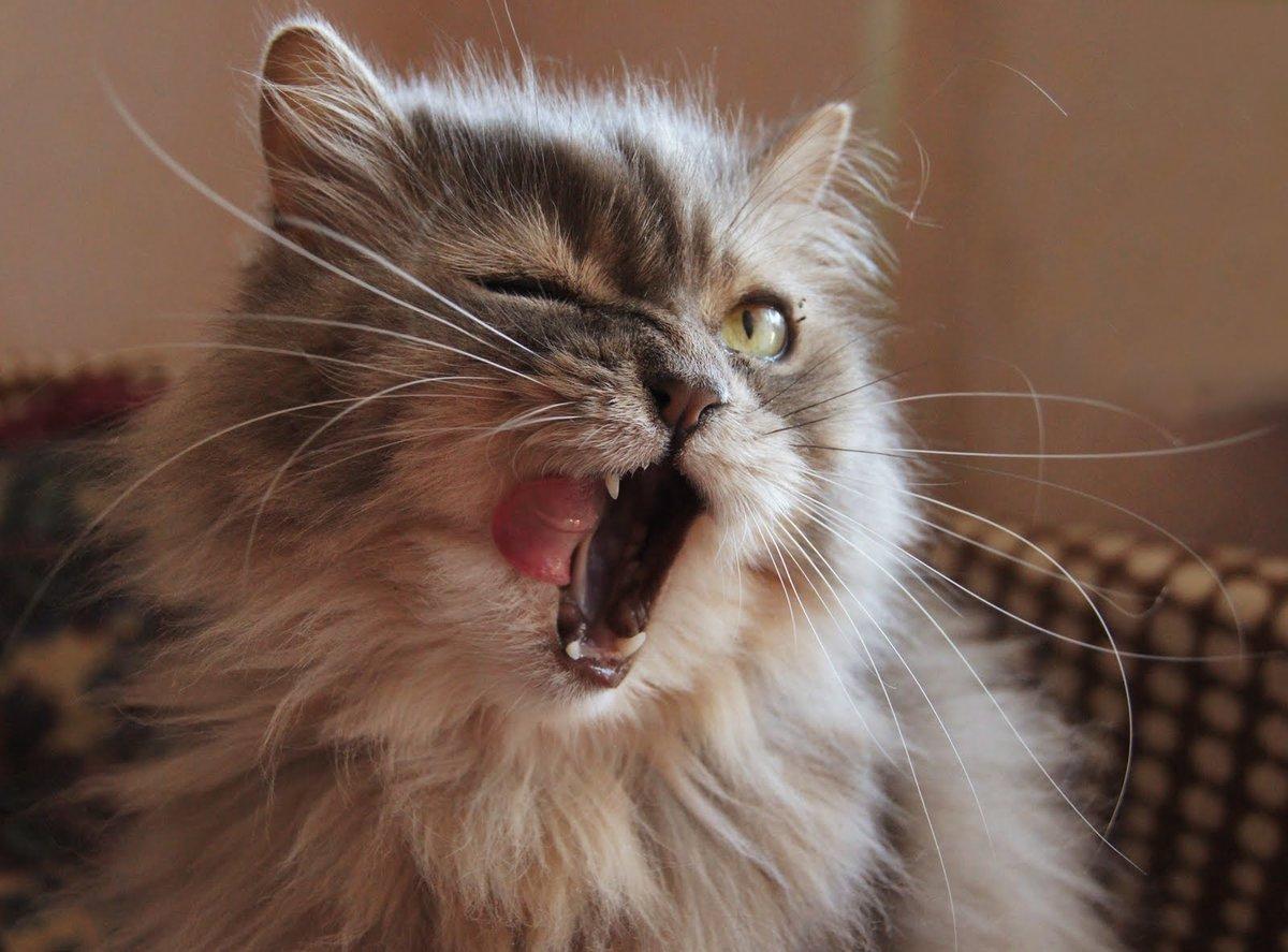 Картинки шкодные коты