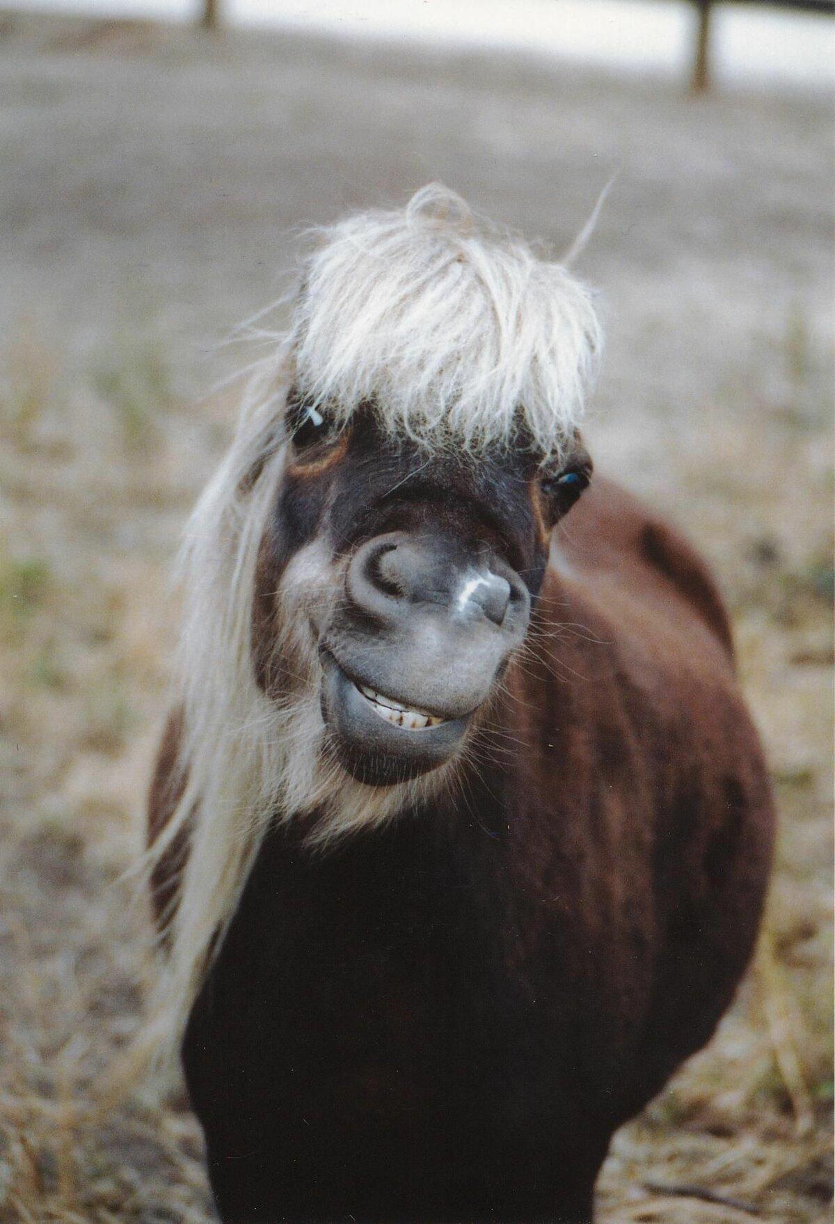 смешные фото с пони являются